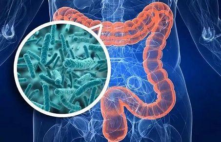 维护肠道健康怎么做